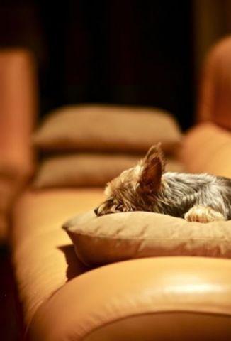 sofa2.jpg