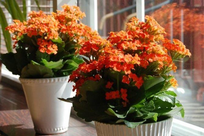flores-dentro-casa