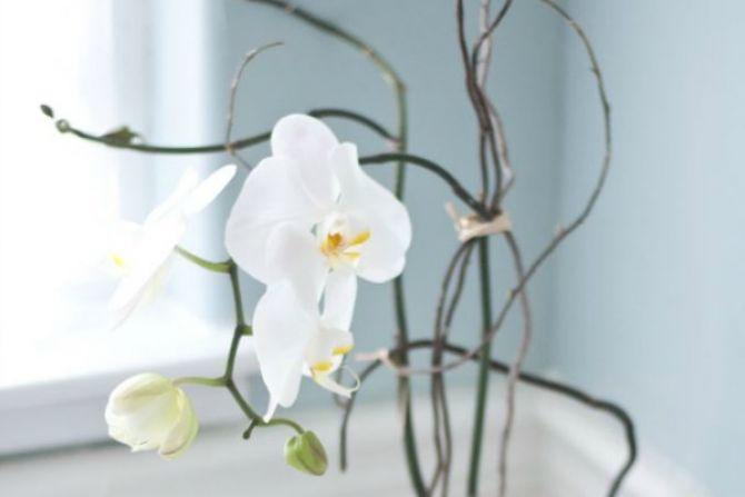 flores-para-interiores