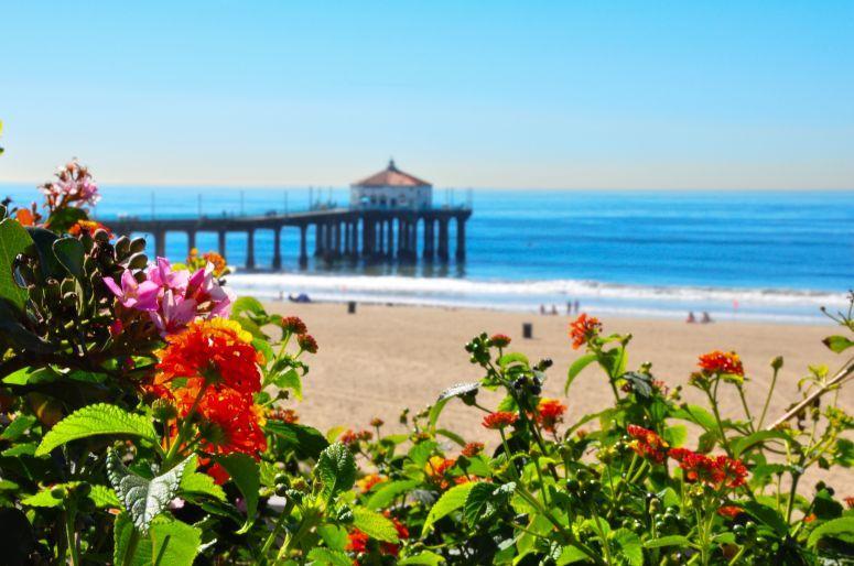 flores-jardim-de-praia