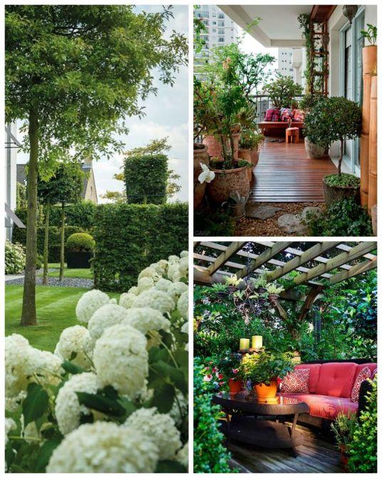 jardinagem-para-casa.jpg