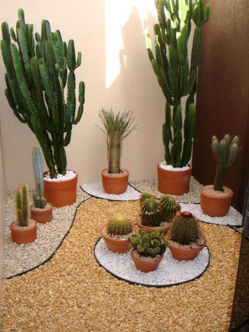 Plantas resistentes para o jardim de inverno